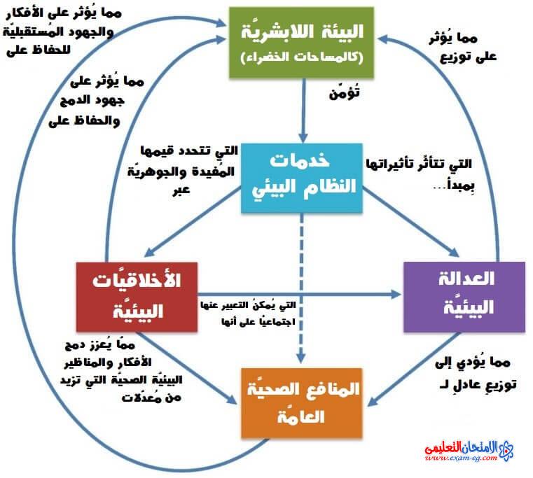 العلاقة بين مكونات البيئة والعوامل التي تؤثر فيها
